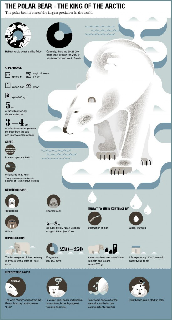 polar_bear_infographic